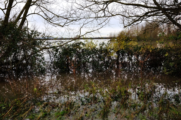 Flooded fields - Muchelney