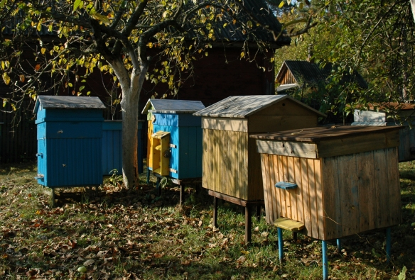 Beehives in Vasily's garden