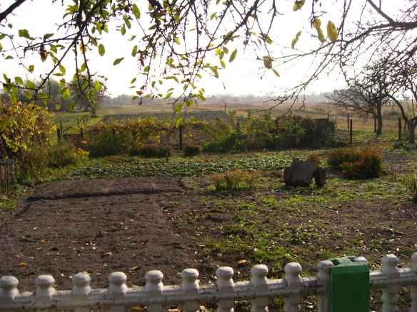 Vasily's garden