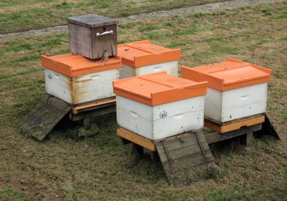 Buckfast Abbey apiary