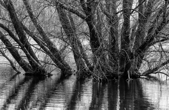 Trees at Blagdon Lake 2