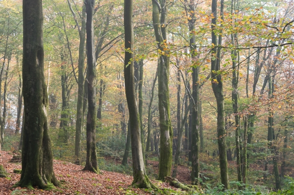 Beacon Wood 2